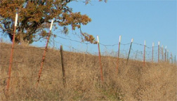 Horse fence - Replace dancerous fence with high visibility pasture fence