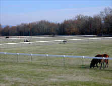Horse fencing - Equi-Tee is safer plastic and wire pasture fencing